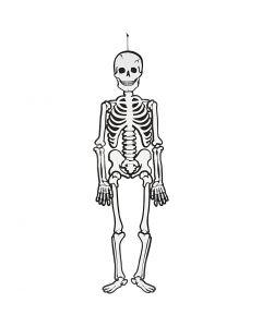 Skelet, H: 120 cm, 300 g, hvid, 1 stk.