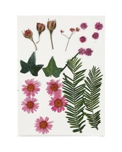 Tørrede blomster og blade, lyserød, 19 ass./ 1 pk.