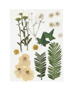 Tørrede blomster og blade, råhvid, 19 ass./ 1 pk.