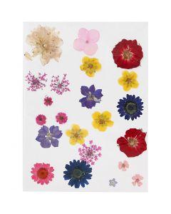 Pressede blomster, ass. farver, 1 pk.