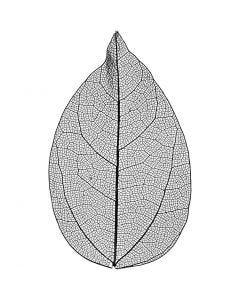 Skeletblade, L: 6-8 cm, sort, 20 stk./ 1 pk.