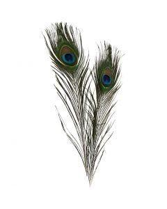 Påfuglefjer, L: 25-30 cm, 10 stk./ 1 pk.