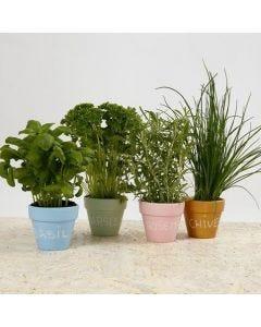 Dekorerede urtepotter til krydderurter