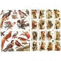 Glansbilleder, fugle, 16,5x23,5 cm, 2 ark/ 1 pk.