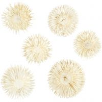 Tørrede blomsterhoveder, diam. 3-5 cm, 6 stk./ 1 pk.