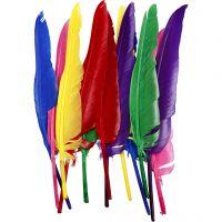 Fjer, L: 27 cm, ass. farver, 12 stk./ 1 pk.