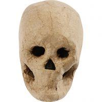 Kranium, H: 10 cm, 1 stk.