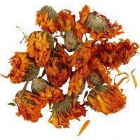 Tørrede blomster, Morgenfruer, diam. 1 - 1,5 cm, gylden, 1 pk.